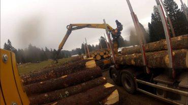 Timber trucks loading